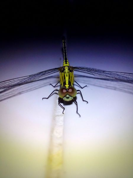 Insect Photography Dragonfly Tiny Insects Close-up Green Color