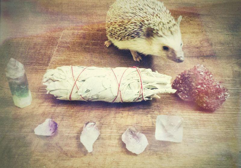 Hogs amd Sage. Sage Crystals Hedgehog Meditation