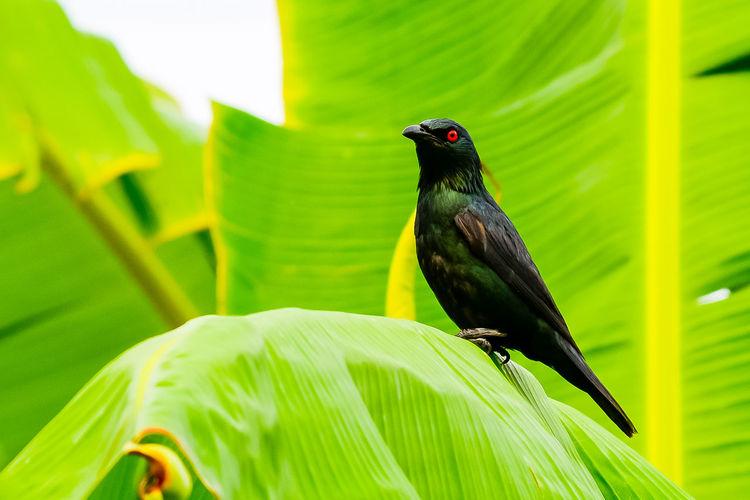 Close-Up Of Bird Perching On Banana Leaf