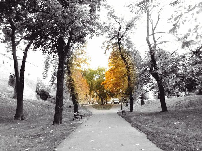 Autumn🍁🍁🍁 Many Colours Beautifulday Nature Way Walking Crossroads Tree Beauty In Nature