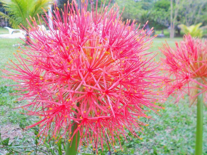 Itaborai Riodejaneiro Flores Likeforlike Hello ❤ Curte Sdv