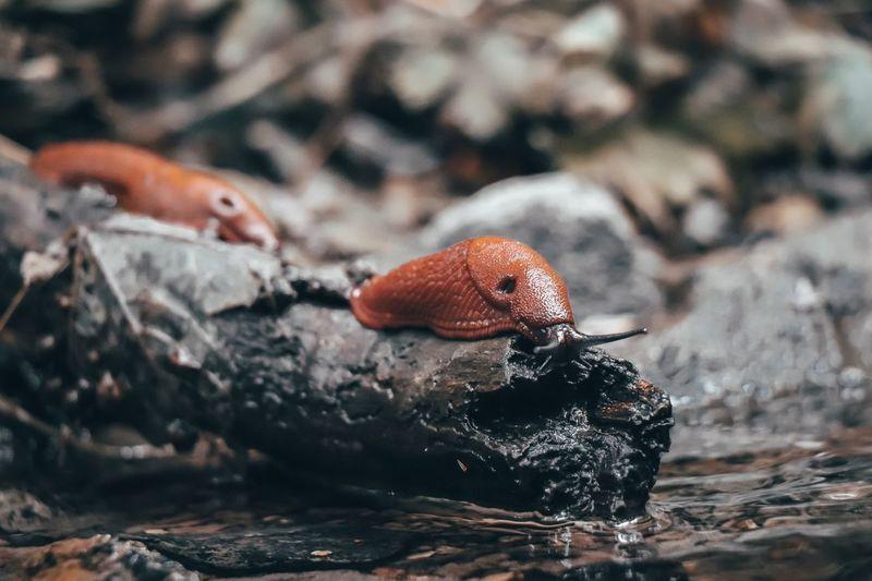 Close-up of slugs on wood