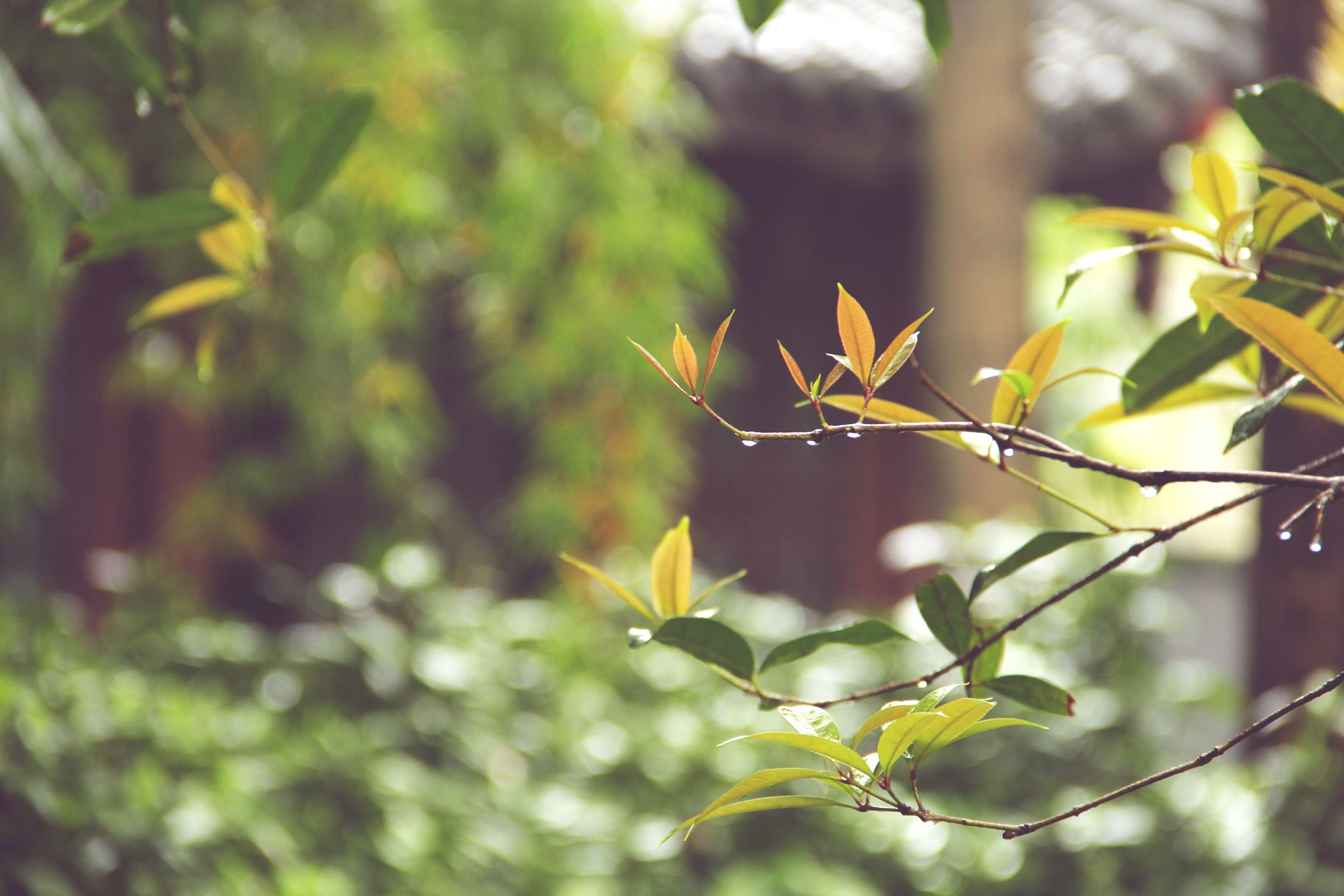 leaf, branch, focus on foreground, growth, close-up, plant, tree, nature, selective focus, green color, twig, outdoors, day, sunlight, beauty in nature, no people, leaves, stem, tranquility, growing