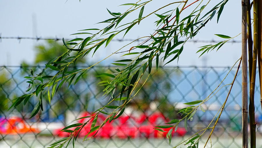 Close-up of plants against fence