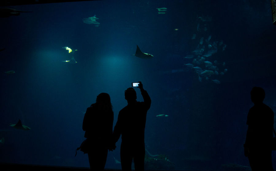 Technology I Can't Live Without Wroclaw, Poland XXIth Century Aquarium Beauty In Nature Dark Photography Fish Lifestyles Love In Nature Photographing Real People Sea Life Technology Watching Wildlife