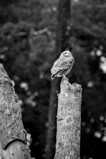 Coruja-buraqueira Animals In The Wild Animals In The Wild Wildlife Bird Photography Burrowing Owl Coruja Nature Passaro Animal Photography Animal Themes Animal Wildlife Beauty In Nature Beauty In Nature Bird Coruja Buraqueira Fly Agaric Focus On Foreground Growth Nature No People One Animal Outdoors Owl Perching Perching Bird Tree