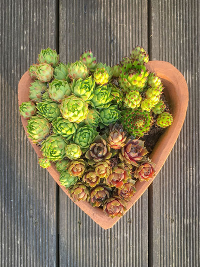 Succulents in a planting pot in the shape of a heart on a wooden terrace Freshness Wood - Material Directly Above Wellbeing High Angle View No People Large Group Of Objects Green Color Day Close-up Outdoors Variation Still Life Planting Potted Plant Pot Succulents Shape Heart Heart Shape Succulent Plant