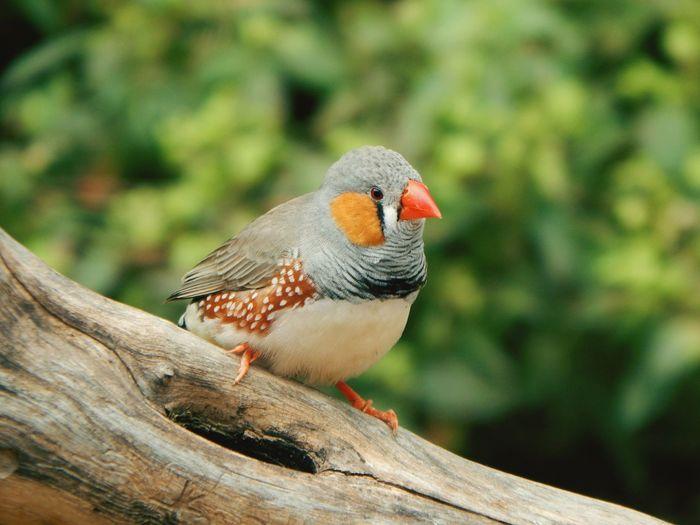 Close-up of bird perching on wood at africam safari