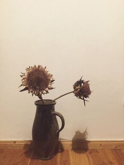 Check This Out Taking Photos Decor No People Berlin Close-up Growth Tranquility Still Life Still Life Photography StillLife Stillleben Artichoke Artichoke In Bloom Artichockes Artichoke Flower Artichoke Love
