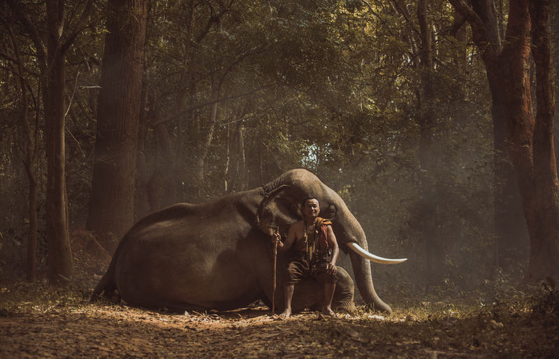 Full length of man sitting by elephant in forest