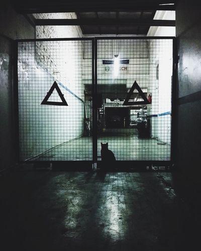 Haruki Murakami Cat Green The Moment - 2015 EyeEm Awards