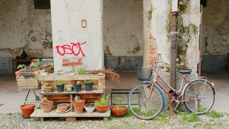 Torino, Italy Torino ❤ Torino Passeggiando Bycicle Bicicletta Italy🇮🇹 Italytrip Italy Holidays Italy❤️ orto Ortourbano Streatphotograpy Torinodascoprire Torinoélamiacittá Italy