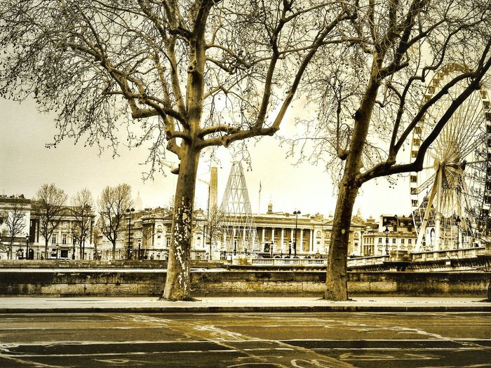 La Seine, Paris Riverbank View Cold In Paris Sepia Toned Architecture Impressive Architecture Trees Day Outdoors Cityscapes Urban Exploration No Hectic Sunday Morning France🇫🇷 The Street Photographer - 2018 EyeEm Awards
