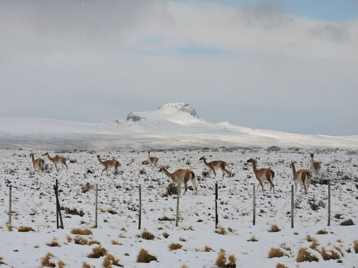 Beauty In Nature Blanco Chile Cold Temperature Day Guanacos Naturaleza Nature Nevado No People Outdoors Patagonia Chilena Sky Snow Tranquility White Color Winter