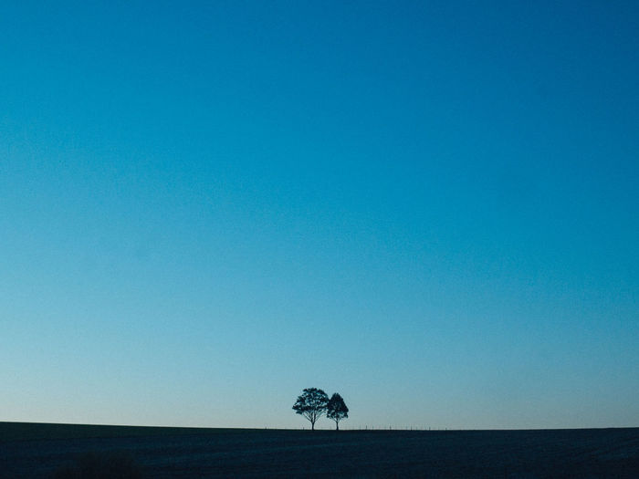 Sky Copy Space Clear Sky Landscape Blue Nature Tree Plant Land Beauty In Nature Scenics - Nature Environment Tranquility Field No People Horizon Tranquil Scene Horizon Over Land Non-urban Scene Single Tree Outdoors Arid Climate My Best Photo