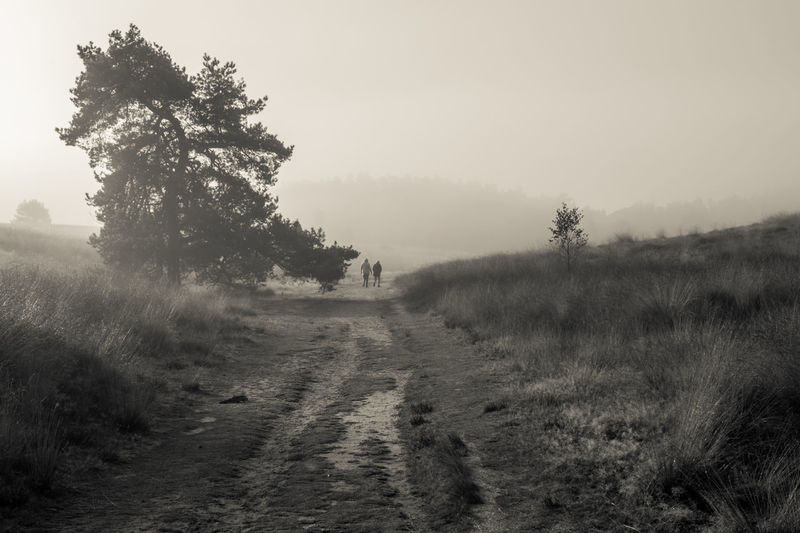 Celebrating the morning in the forests of The Veluwe, The Netherlands - People walking on a path on the heath Black & White Black And White Blackandwhite Blackandwhite Photography Fog Foggy Forest Forest Photography Forestwalk Light Light And Shadow Morning Morning Light Nature Nature Photography Nature_collection Naturelovers Tree Trees