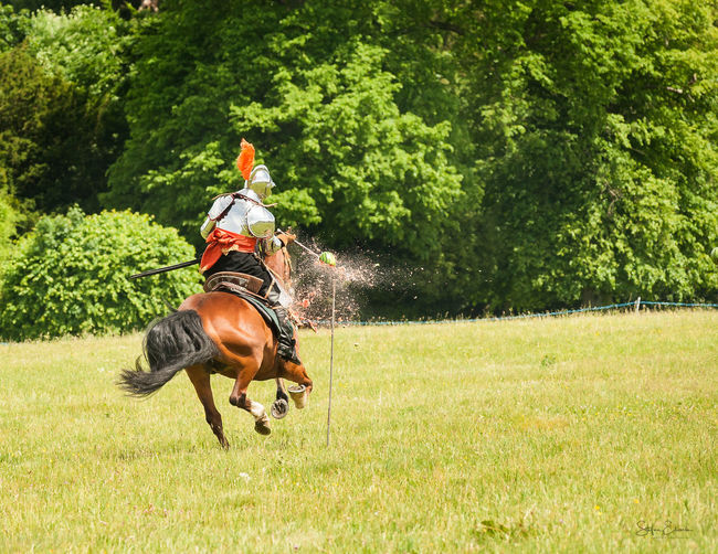 Man riding horses on field against trees