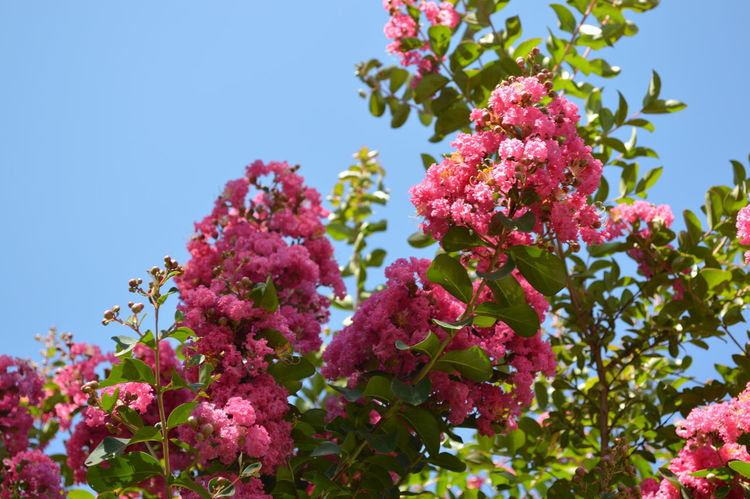 Flowers Pink Color Sky Sunlight Plant Nature Beauty Green Photography Day Blue Sky Green Color Bautiful Day Visage Perfection Picture