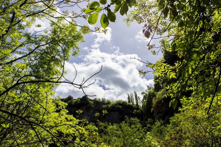 Nature Low Angle View Growth Sky Cloud - Sky Beauty In Nature Outdoors Branch No People Leaf Tree Day Beauty In Nature Low Angle View Nature Scenics First Eyeem Photo Creazione Spiragliodiluce Prospettiva Forza  Canon Canonphotography Canon_photos Canon600D
