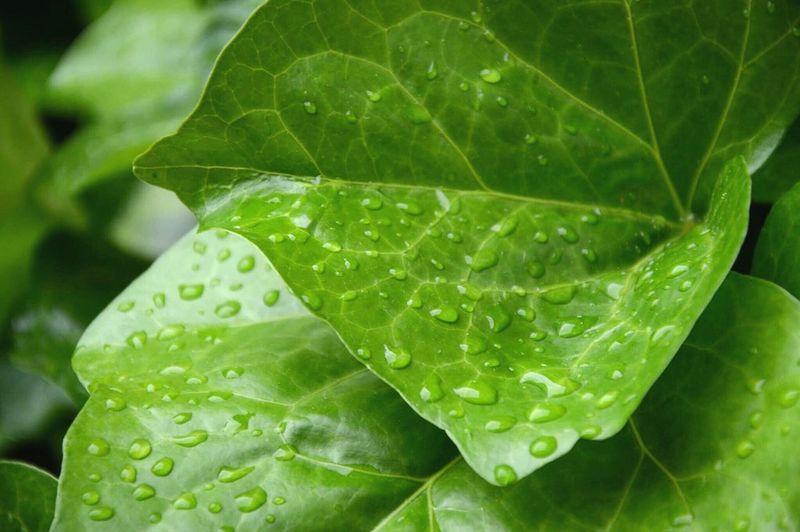 • Le calme après la tempête • Green Goute D'eau Spring New Macro Feuilles Liere Passion Photo