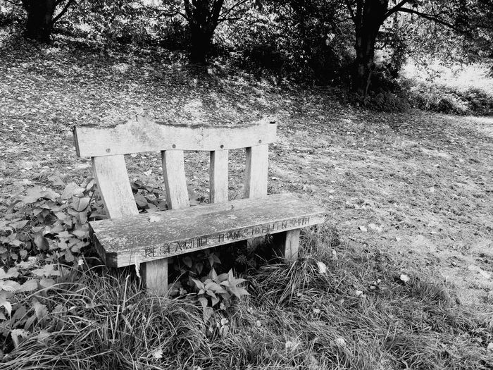 A place to chill, Outdoors High Angle View No People Park - Man Made Space Breathing Space The Week On EyeEm Let's Go. Together. Getting Away From It All Investing In Quality Of Life EyeEm Selects Live For The Story The Great Outdoors - 2017 EyeEm Awards Bench Life Black And White Friday