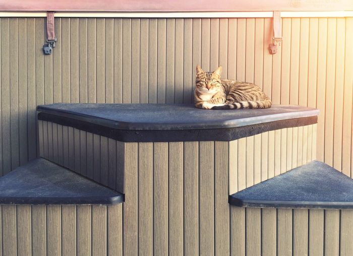 Cat lying on wood at home