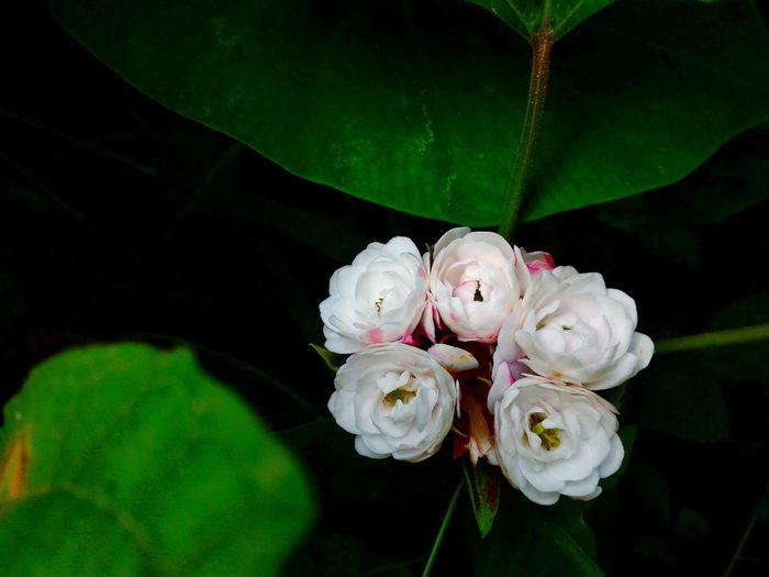 Fall Beauty every flower has its own beauty FlowerLove 🌸 Standalone