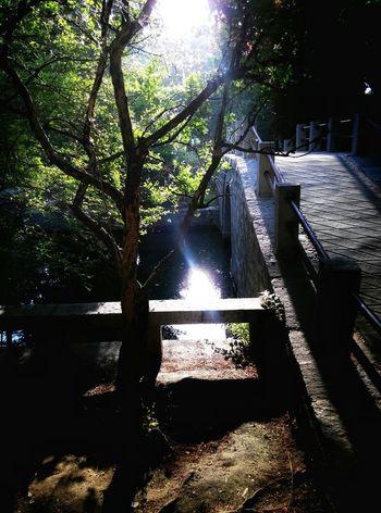 Sunshine ☀ Morning Light Enjoying Life Happy Time 😛 😁 💎 ✌ Nature Photography Green Color Beautiful Nature