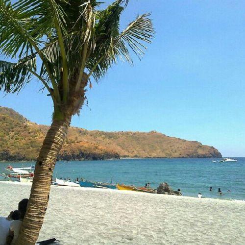 A little bit of sun on a rainy day. Beach Tree Anawangin Philippines morefuninpinas TRAVEL globalnomads