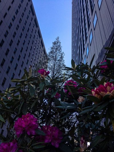 Twilight Sky Plant Architecture Built Structure Flower Low Angle View Office Building Exterior City