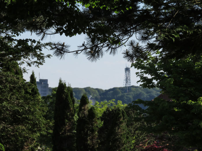 framed vue with the tower of aalborg Tree Tree Area Forest Sky Architecture Tall - High Lush Foliage