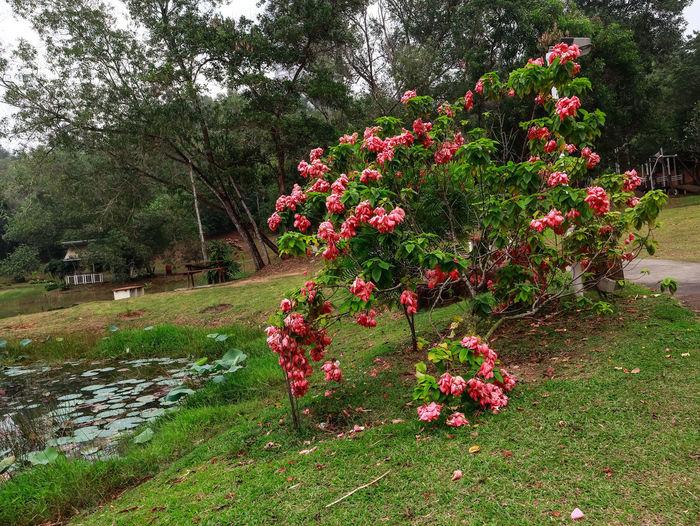 Flower Tree Red