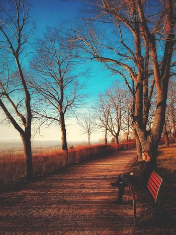 Bare Tree Tree Nature Landscape Tranquility No People Tree Trunk first eyeem photo