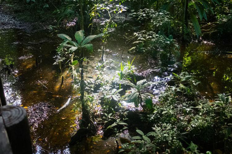 Costa Rica Hiking Tree Wildlife & Nature Forest Hike Jungle Jungle Trekking Ocean Road Trip Wildlife