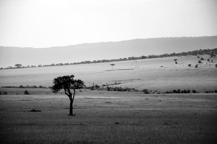 Beautiful serene landscape of famous Masai Mara National Reserve in Kenya, Africa. Beauty In Nature Black And White Black And White Photography Day EyeEm EyeEm Best Shots EyeEm Gallery EyeEm Nature Lover EyeEm Photo Of The Day EyeEmBestPics EyeEmNewHere Hills And Valleys Kenya Landscape Landscape Photography Masaai Masaai Mara National Reserve Nature No People Outdoors Photography Tranquil Scene Tranquility Trip