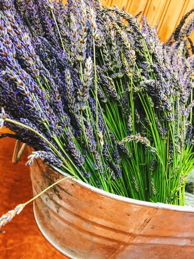Beauty In Nature Bunch Of Flowers Bunches Of Lavender Copper Bucket Copper Color Fresh Cut Lavender Lavender Farm No People Purple