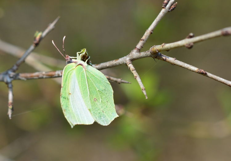 Focus On Foreground Plant Green Color Close-up No People Day Nature Invertebrate Insect Growth Tree Outdoors Animal Wildlife Animals In The Wild Animal Themes One Animal Branch Animal Beauty In Nature Selective Focus