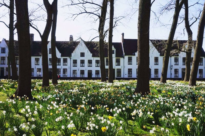 Bruges Beguinage Spring Narcissus Bloom Flowers First Eyeem Photo