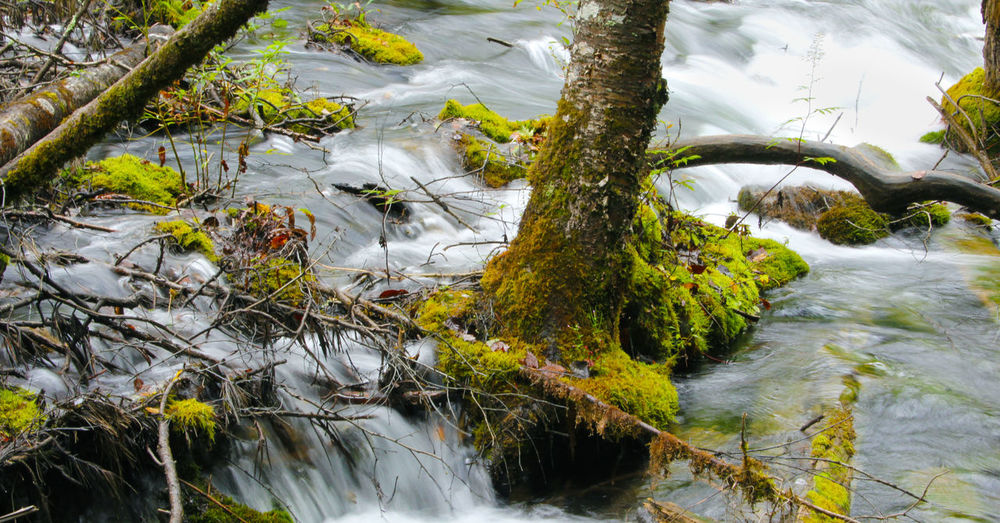 Water Tree Plant Beauty In Nature Nature No People Tranquility River Flowing Water Tree Trunk Outdoors Trunk Branch Moss Forest