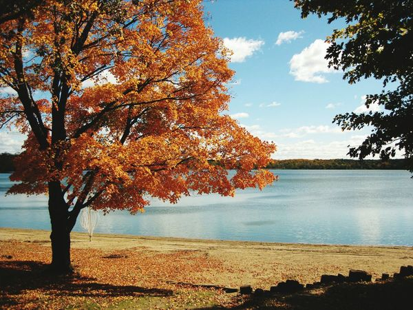 Minneapolis Minnesota Lake View Autumn🍁🍁🍁 Trees Blue Sky