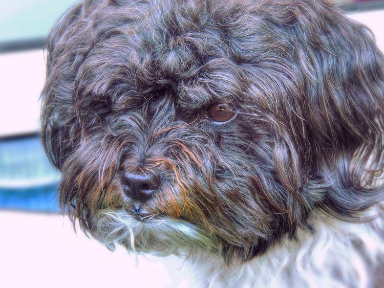 My dog Dog Dog Love Bolonka Hi! Taking Photos Pets Pet Photography  Germany Hello World Doglover EyeEmbestshots Nature Dogportrait Dogs Of EyeEm Animals