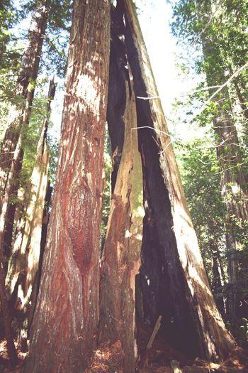 Vacation Tall Tree