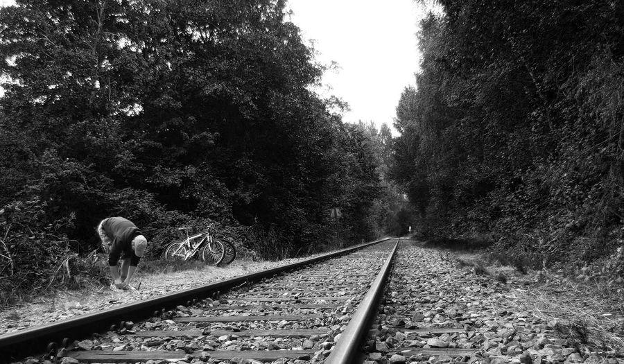 Dog walking on railroad track
