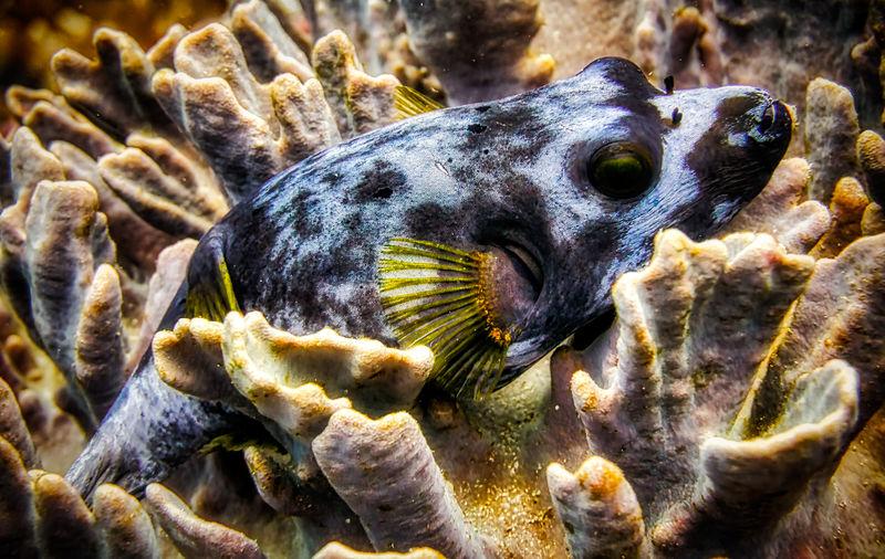 Box fish Marine Life, Ocean Sea Life Underwater Fish Corridor