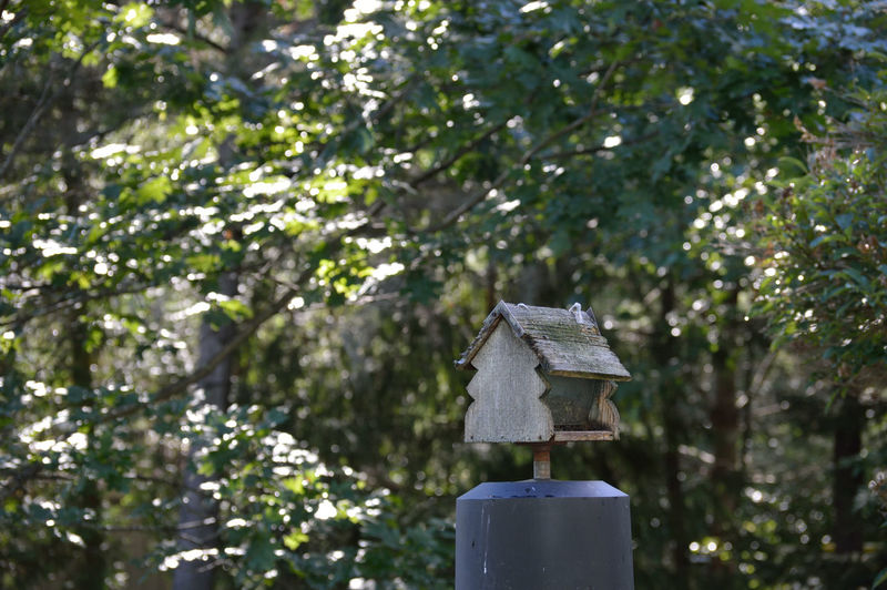 Beauty In Nature Bird Bird House Close-up Day Focus On Foreground Forest Green Color Growth Nature No People Outdoors Plant Selective Focus Shade Sunlight Tranquility Tree Tree