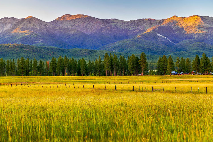 Mountain Mountain Range Animals In The Wild Yellow Animal Themes Scenics Nature Landscape Beauty In Nature Animal Wildlife Bird No People Outdoors Forest Rural Scene Large Group Of Animals Tree Day Sky Flamingo Sumpter Oregon Beauty