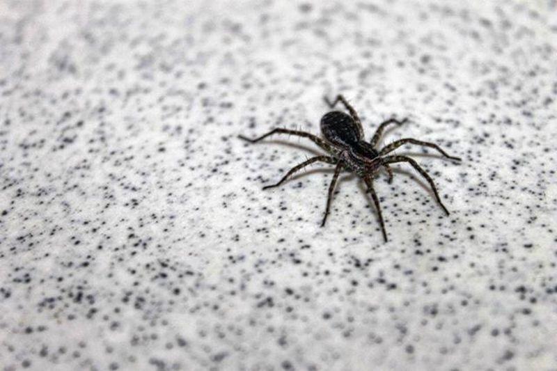 "Wild Spider Spidey Photooftheday Noeffect Inifotoku "" they call me spidey """