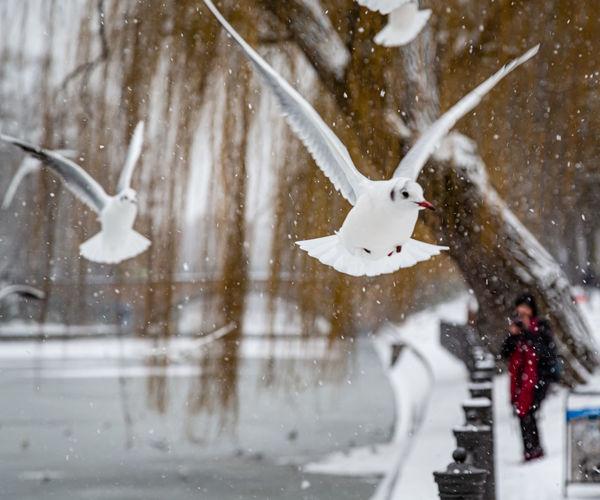 White heron on snow covered tree