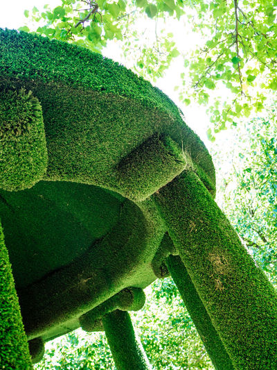 Art ArtWork Bendigo Art Gallery Green Green Color Growth Low Angle View Nature Statue
