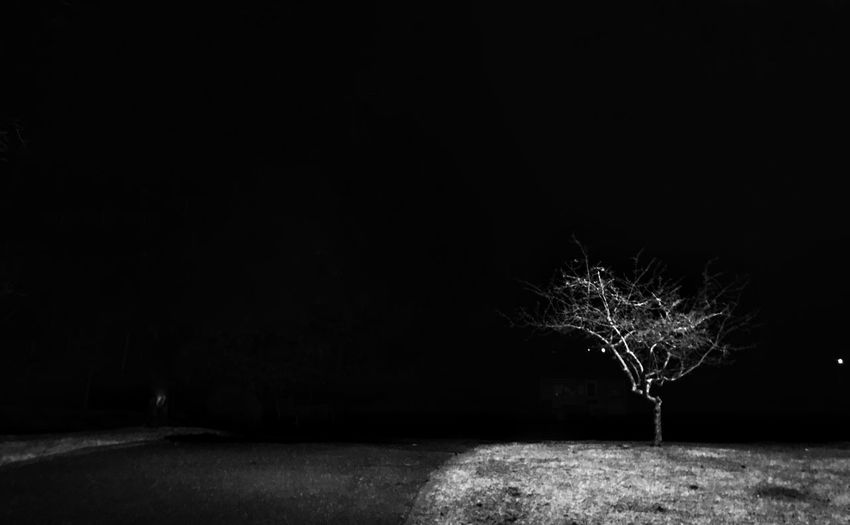 Single tree at night